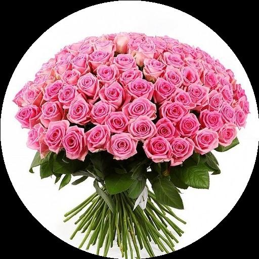 Розы разные цветы