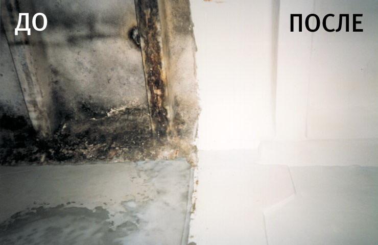 Как в домашних условиях убрать грибок со стен