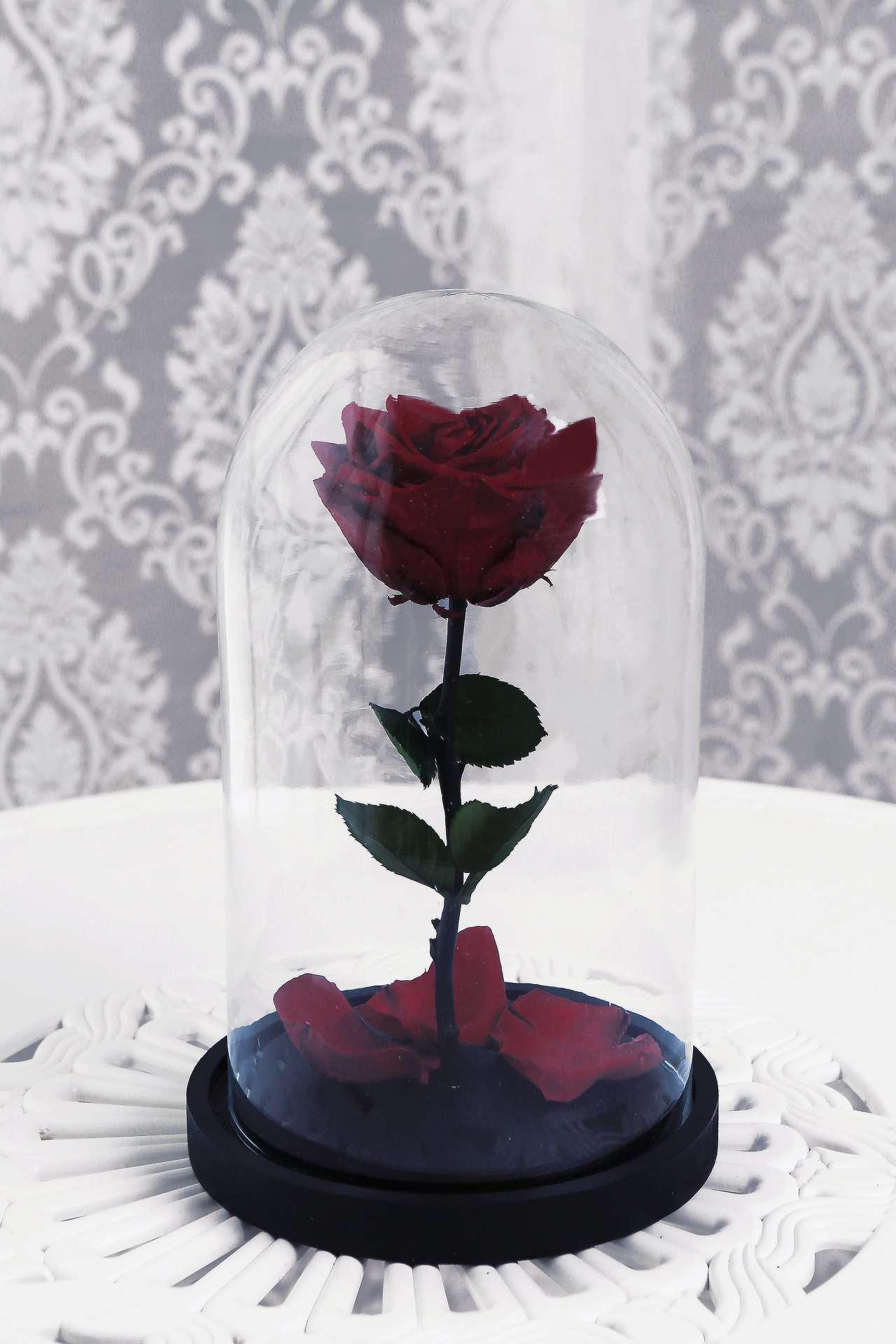 Роза в колбе купить в минске